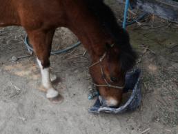 Ferme de poneys